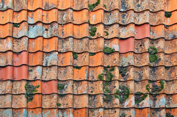 moss in terracotta roof